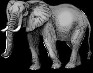 Elefant auf Thailändisch