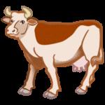 Kuh (Rind) auf Thailändisch