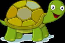 Schildkröte auf Thailändisch